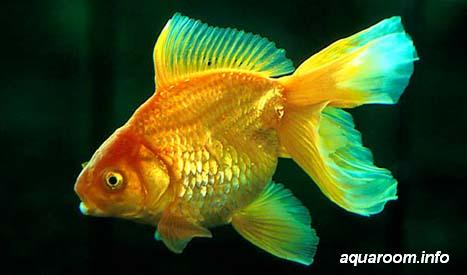 Заповедник, В мире животных, Аквариум, AQUA МИР ...: http://zooanimal.ucoz.ru/index/akvariumnye_rybki/0-33